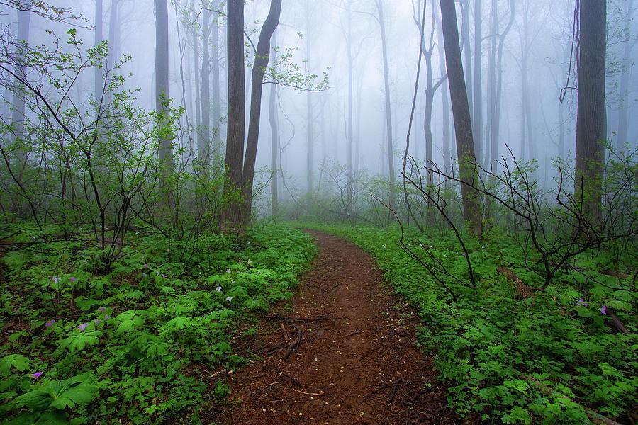 Trillium Path by Jeanne Jackson