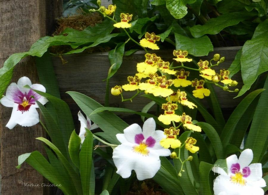 Trio of Orchids by Kathie Chicoine