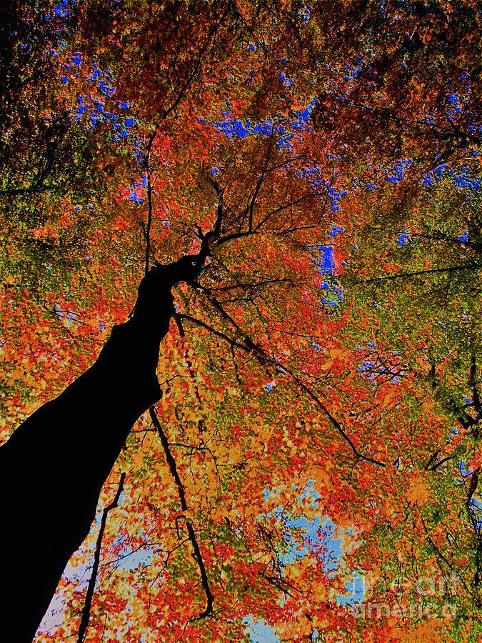 Trip Tree by Luc Van de Steeg