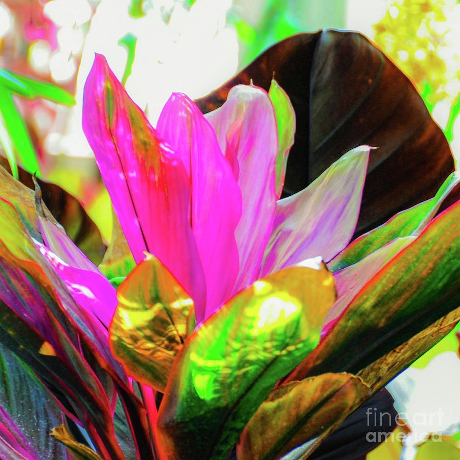 Hawaii Photograph - Tropic Hawaii - Ti Leaf Plant by D Davila