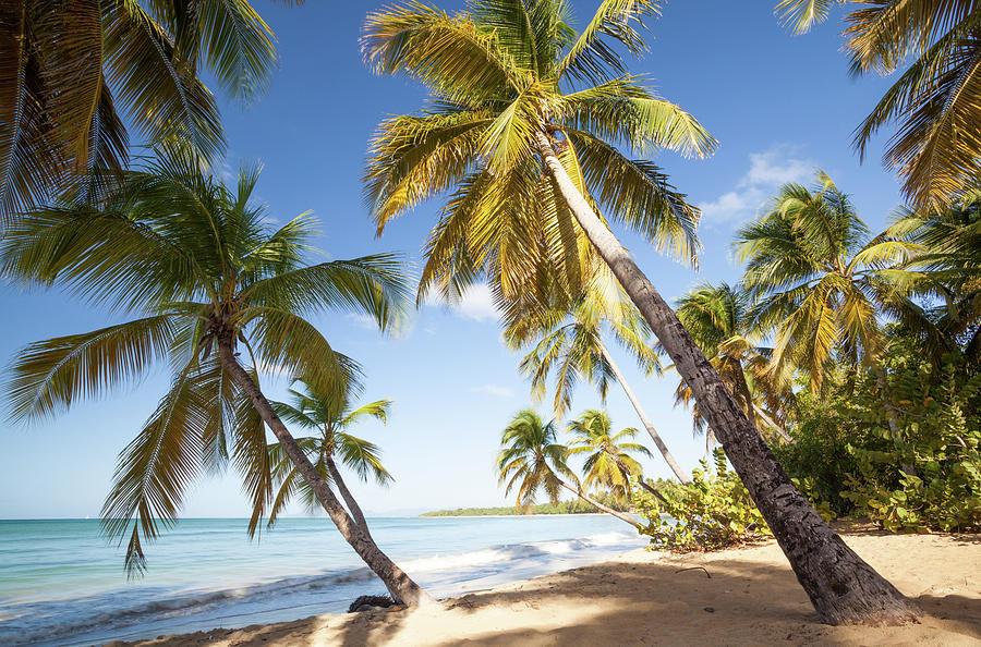 Tropical Beach With Palm Trees In The Photograph by Matteo Colombo