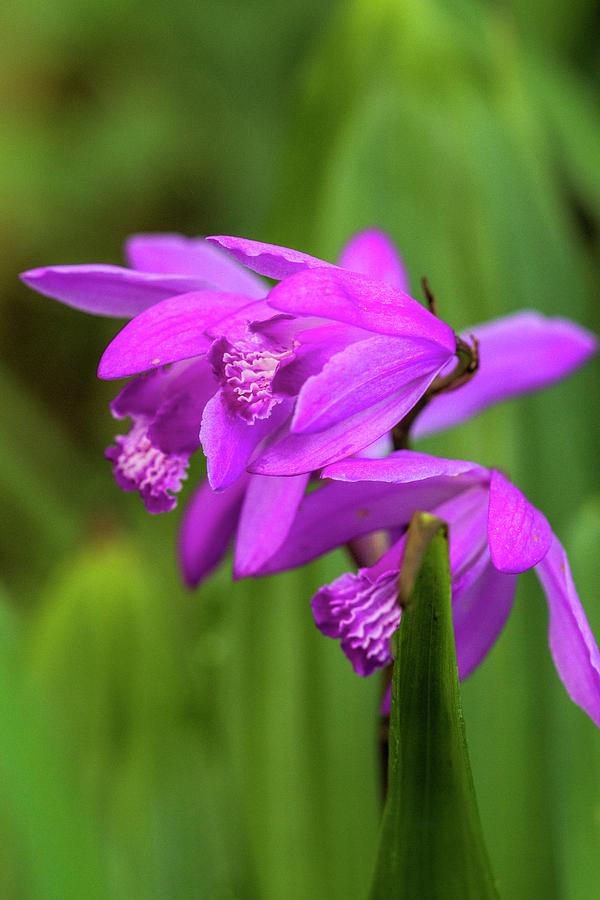 Tropical Beauty But Tough As Nails Hard Orchid by Kathy Clark