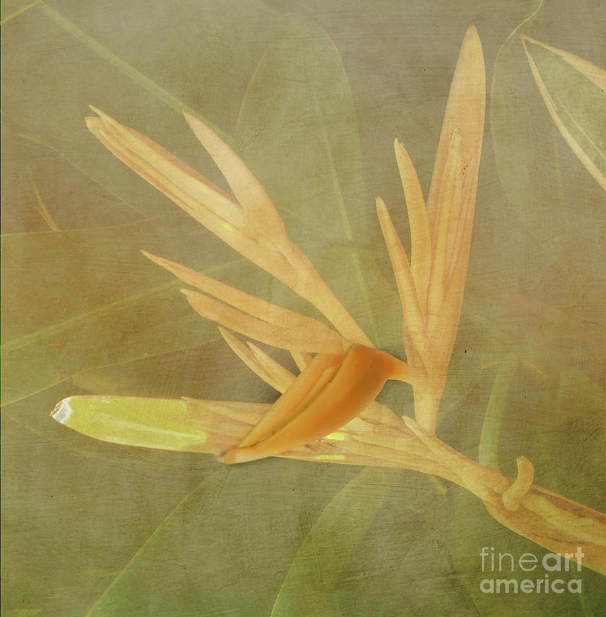 Tropical Bird of Paradise by Judy Hall-Folde