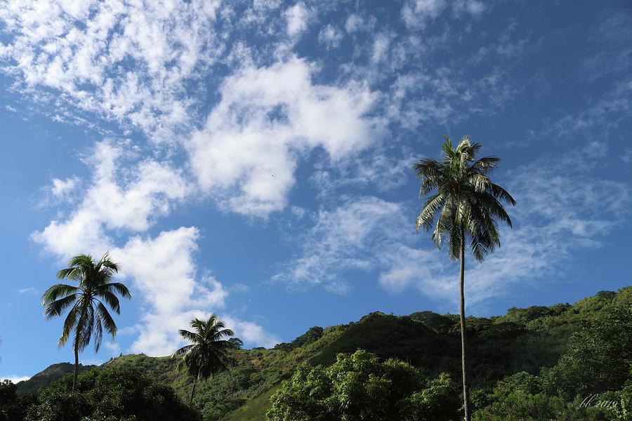 Tropical by Brad Brailsford
