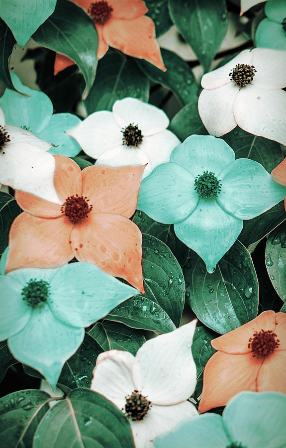 Tropical Dogwood Flowers by Jason Fink
