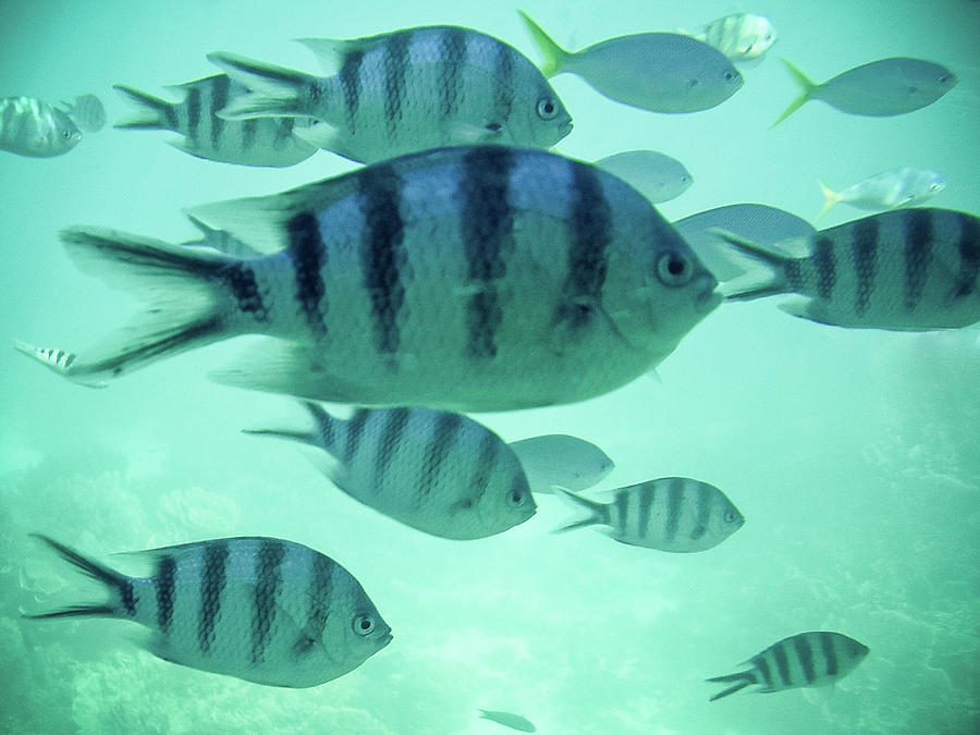 Tropical Fish Photograph by Christopher Kimmel