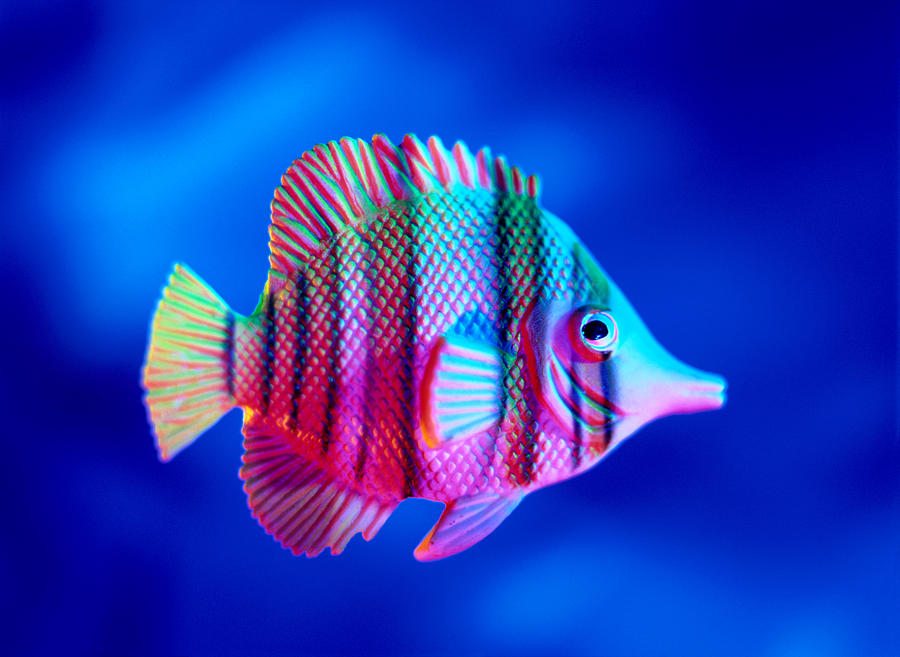 Tropical Fish Close-up Photograph by Lawrence Lawry