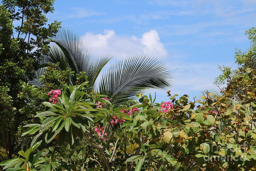 Tropical Flair by Carol Groenen