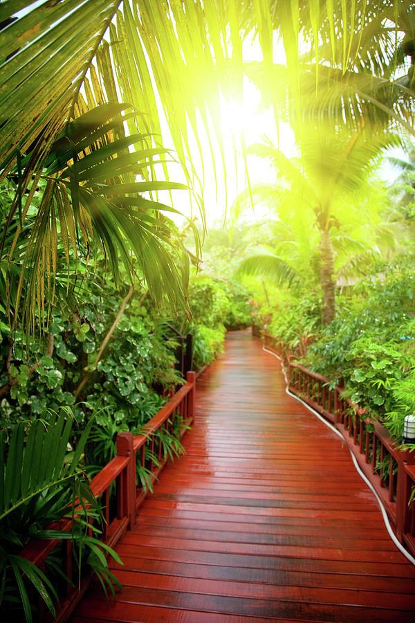 Tropical Garden Photograph by Vladgans
