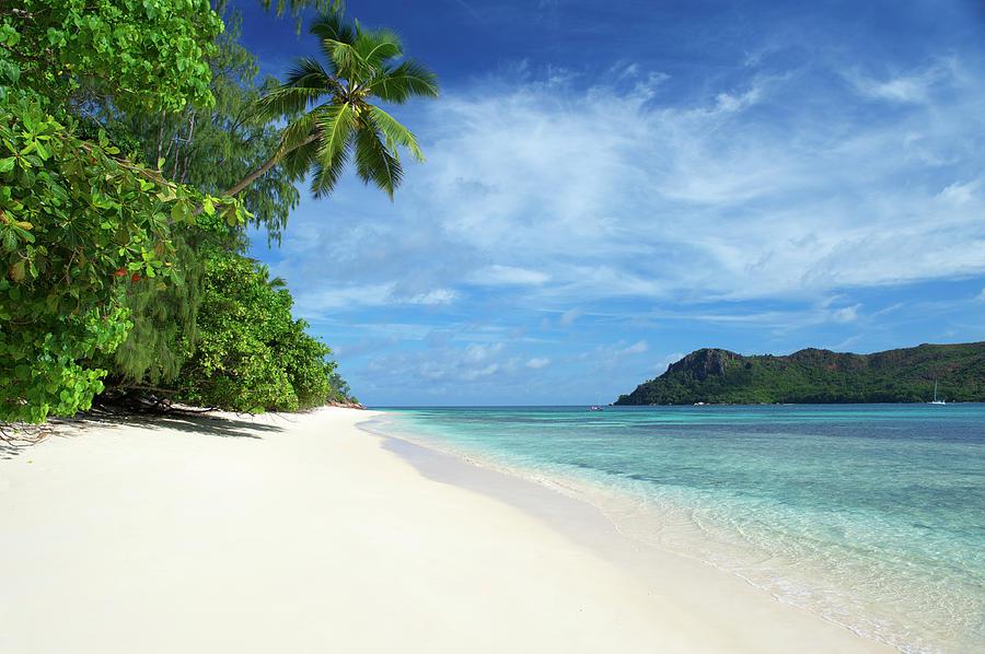 Tropical Island Beach Scene With Palm By Peskymonkey