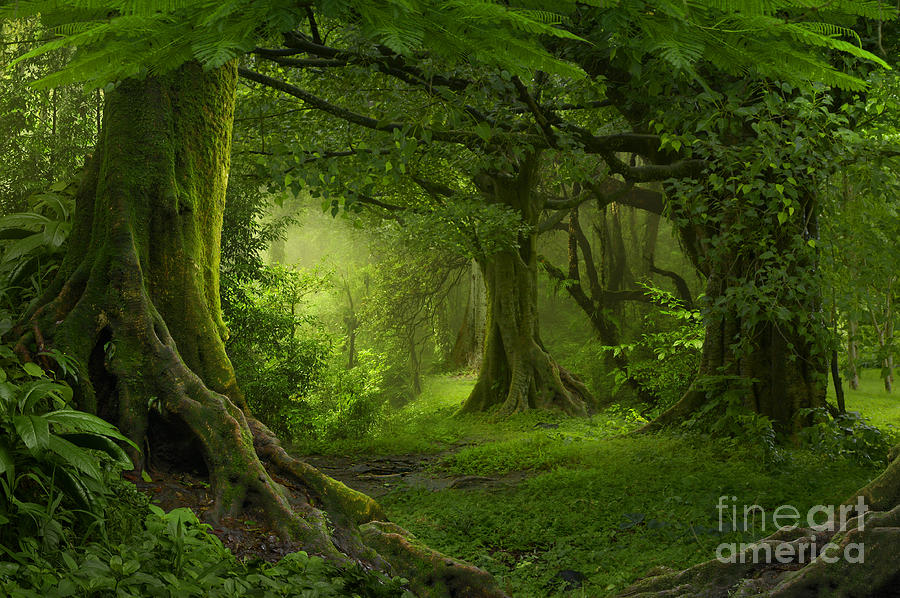 Forest Photograph - Tropical Jungle In Southeast Asia by Quick Shot
