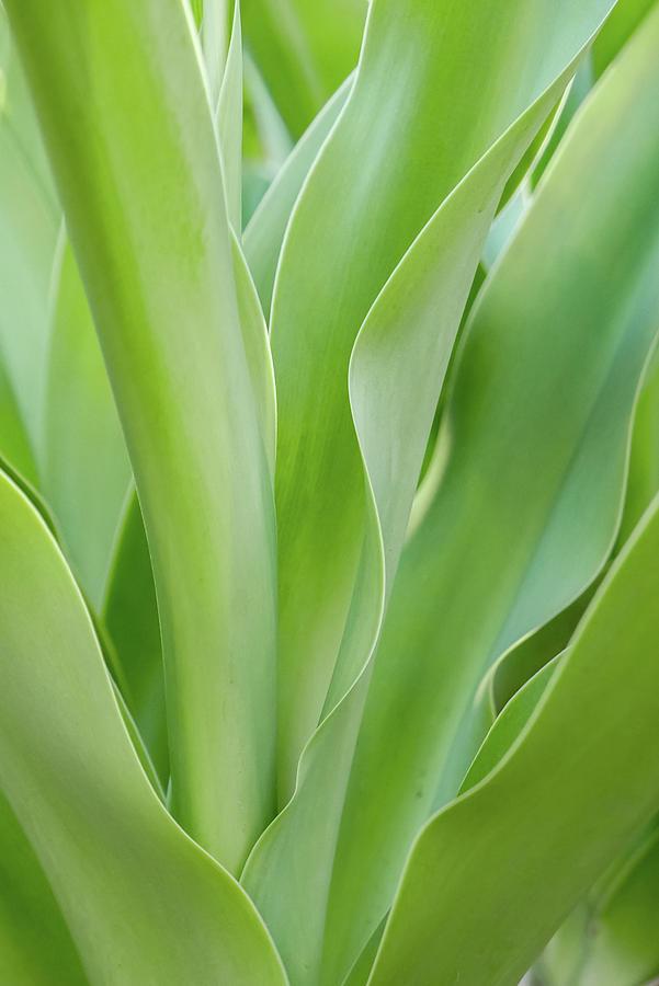 Tropical Leaf by Tita She