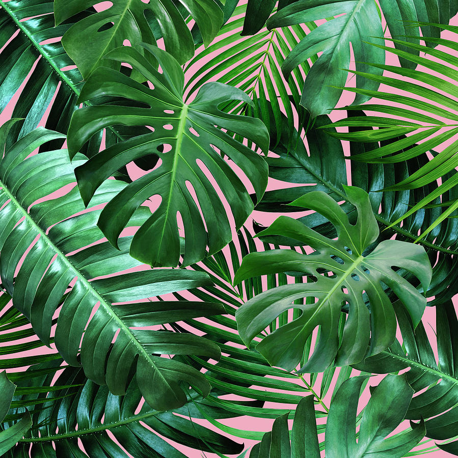 Tropical Leaves On Pink Background Photograph By Natee Srisuk These green leaves will add a fresh natural look to your luau decorations! tropical leaves on pink background by natee srisuk