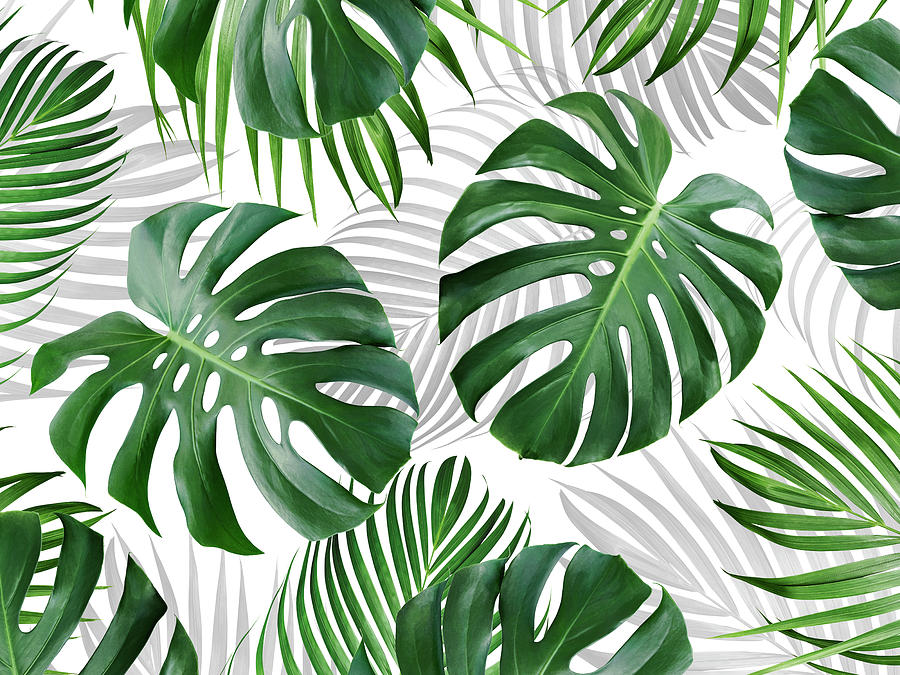 Tropical Leaves Pattern Background Design Photograph By Natee Srisuk Check out our tropical leaf photo selection for the very best in unique or custom, handmade pieces from our prints shops. tropical leaves pattern background design by natee srisuk