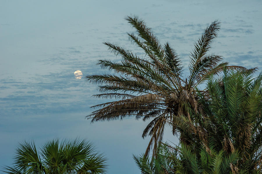 Nature Coast Photograph - Tropical Moon by Mike OShell