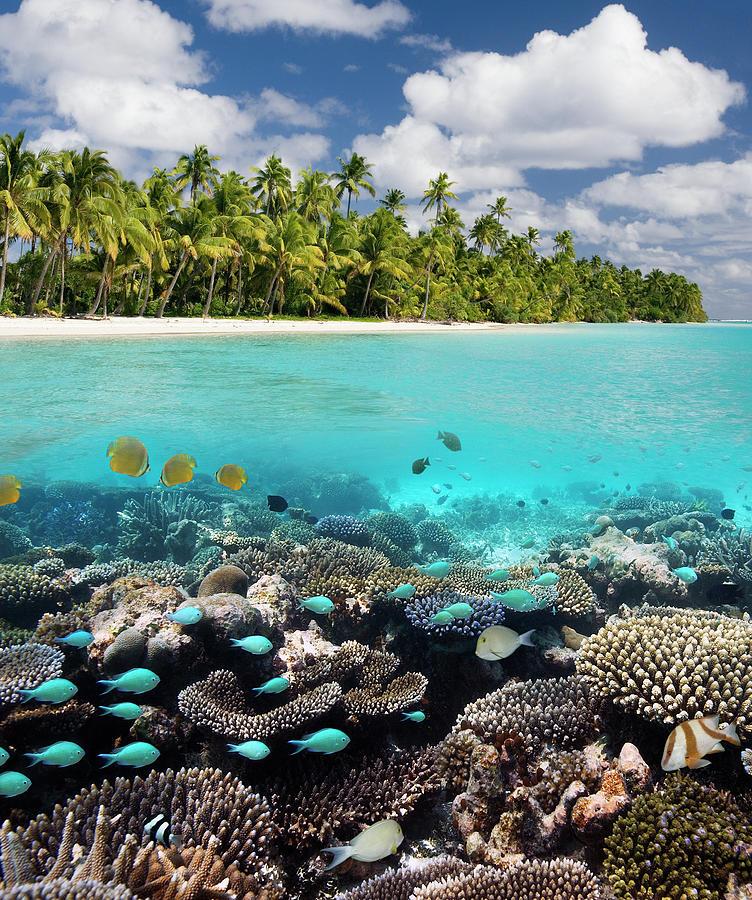 Tropical Paradise - The Maldives Photograph by Steve Allen