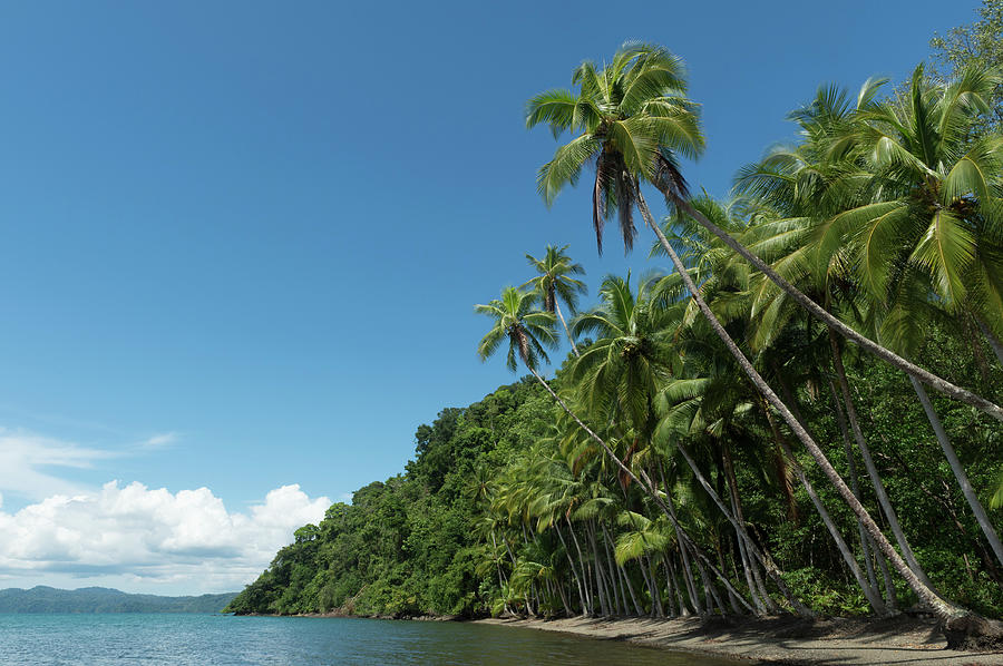 Tropical Rainforest And Beach, Costa Photograph by Creativedream