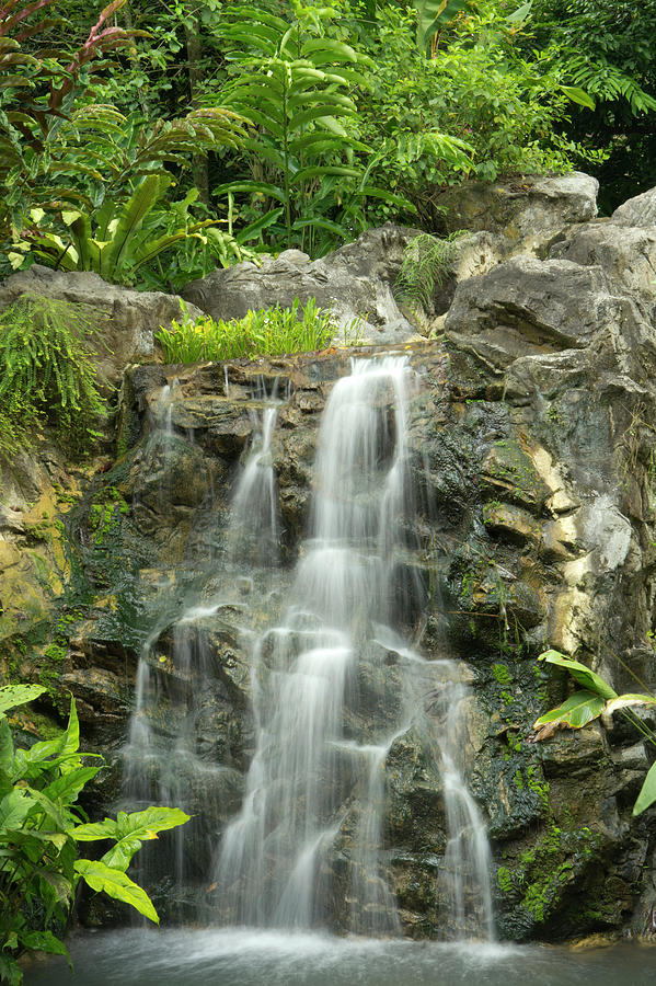 Tropical Rainforest And Waterfall Photograph by Travelpix Ltd