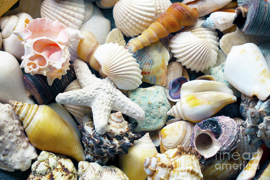 Tropical Treasure Seashells B91218 by Mas Art Studio