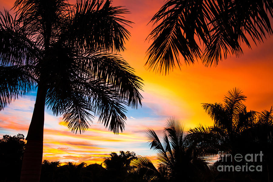 Beauty Photograph - Tropical Trees By The Beach In Central by Mervas
