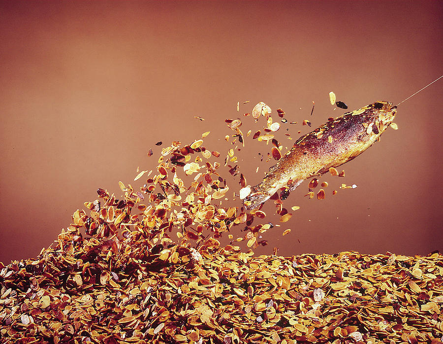 Trout Flying Out Of Bed Of Almonds In Pr Photograph by John Dominis