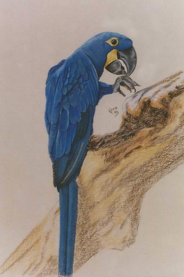 True Blue by Barbara Keith