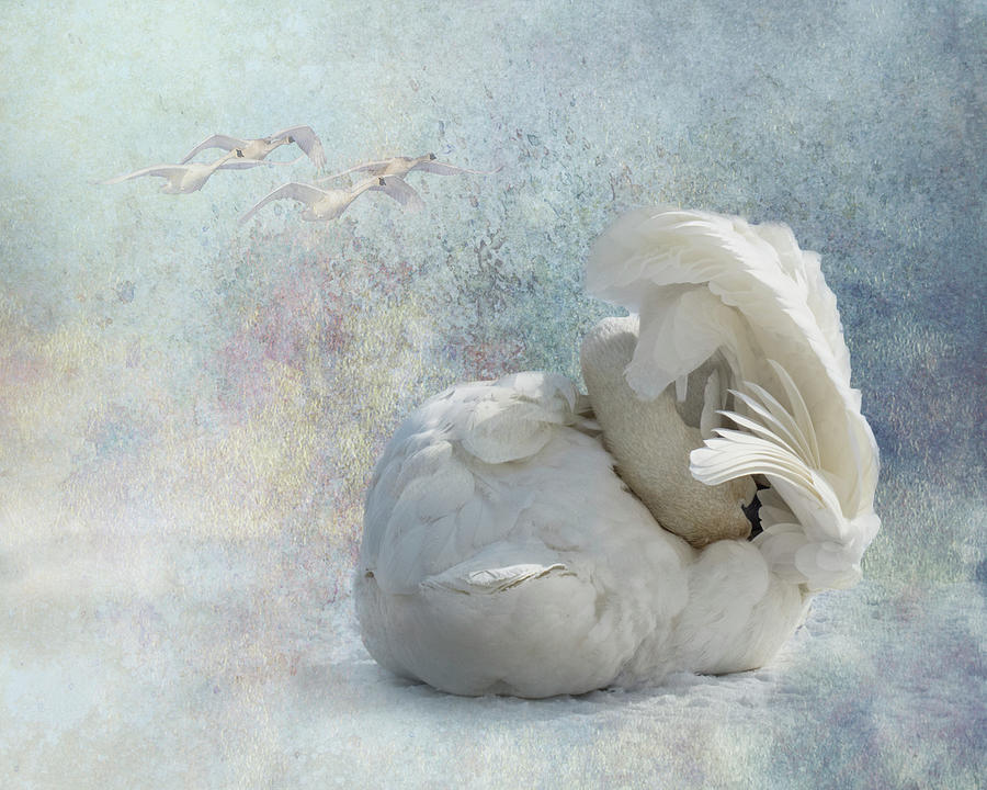 Trumpeter Textures #3 - Swan Tuck by Patti Deters