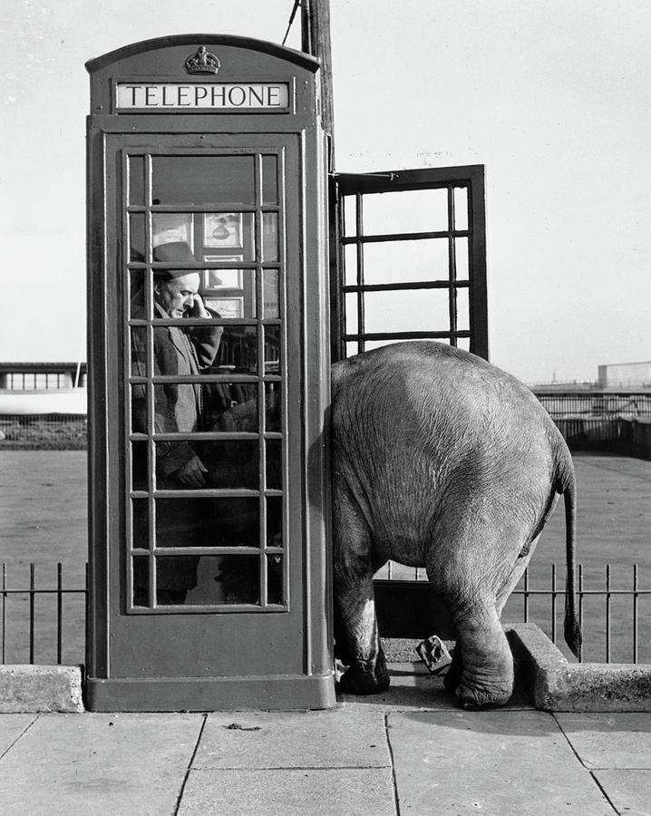 Trunk Call Photograph by John Drysdale