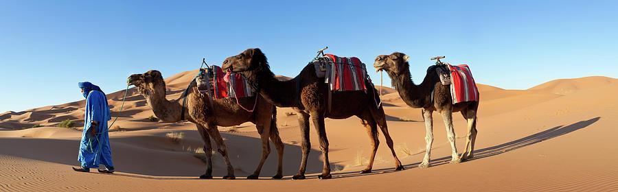 Tuareg Man & Camel, Sahara Desert Photograph by Peter Adams