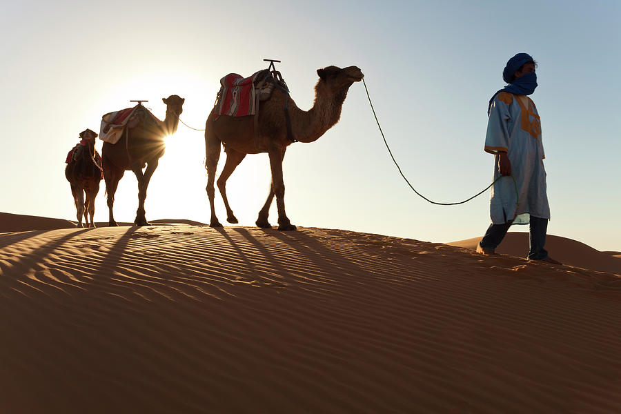 Tuareg Man & Camels, Erg Chebbi, Sahara Photograph by Peter Adams