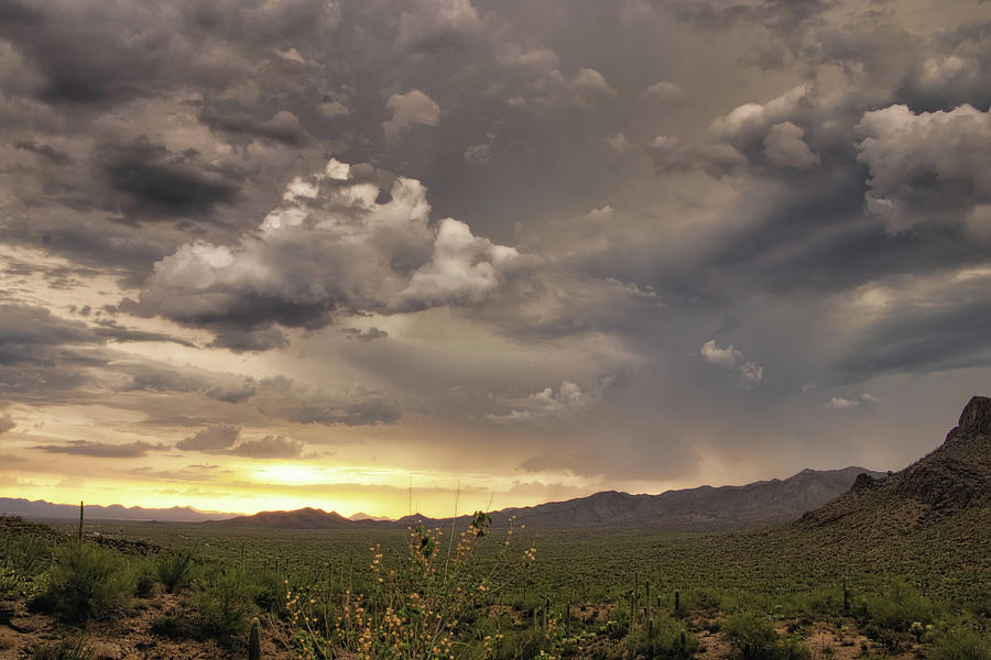 Tucson Mountain Park Sunset by ELAINE MALOTT