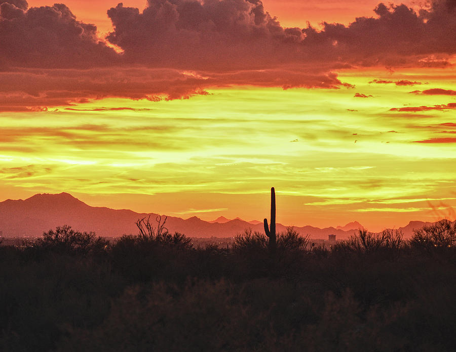Tucson Mountains Sunset, and Saguaro by Chance Kafka