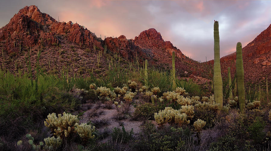 Tucson Photograph - Tucson Mountains Sunset by Dave Dilli
