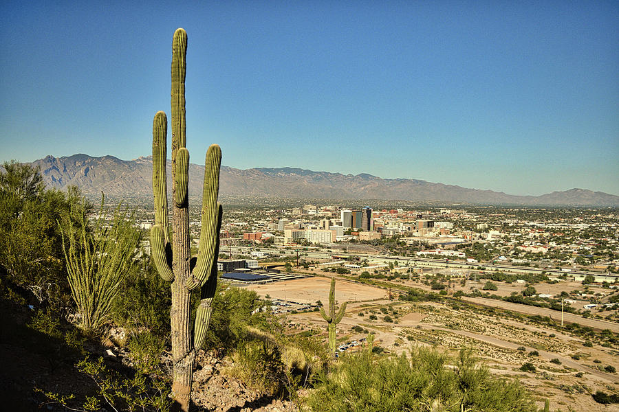 Tucson Skyline and Saguaro Cactus by Chance Kafka