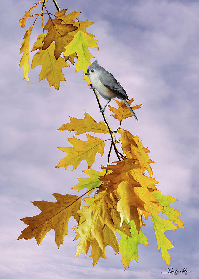 Tufted Titmouse in Autumn by Spadecaller