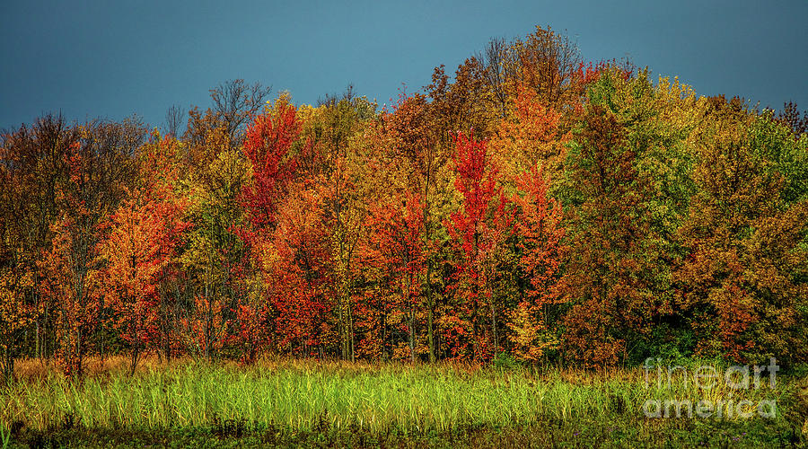 Tug Hill Colors by Roger Monahan