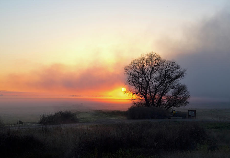 Tule Fog Sunrise  by Cheryl Strahl
