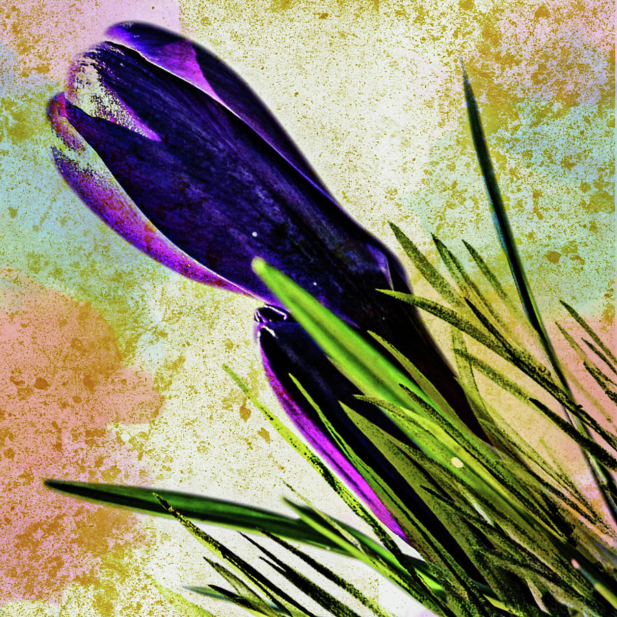 Tulip Digital Art