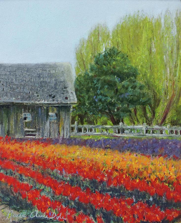 Tulip Pastel - Tulip Barn by Marie-Claire Dole