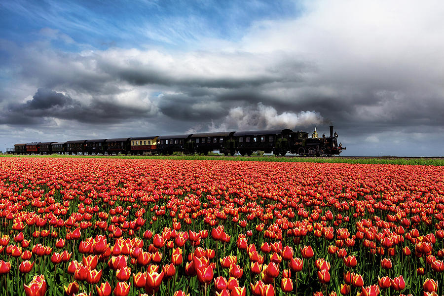 Tulip express by Jorge Maia