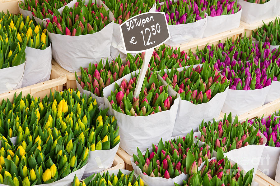 Country Photograph - Tulip Flowers From Holland For Sale by Neirfy
