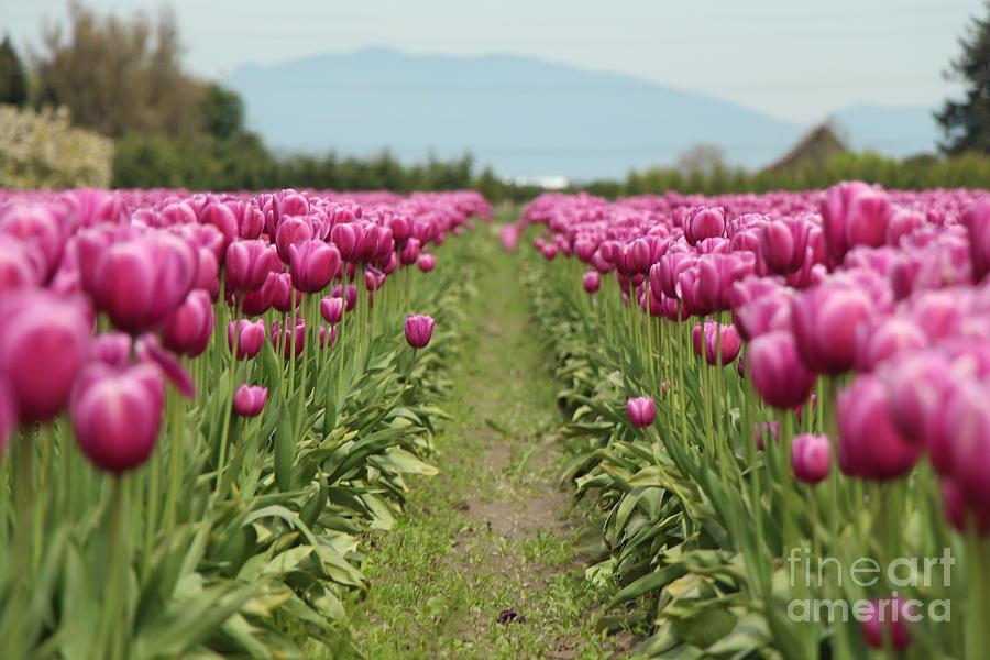 Tulip Photograph - Tulip Garden by Eddie Hernandez