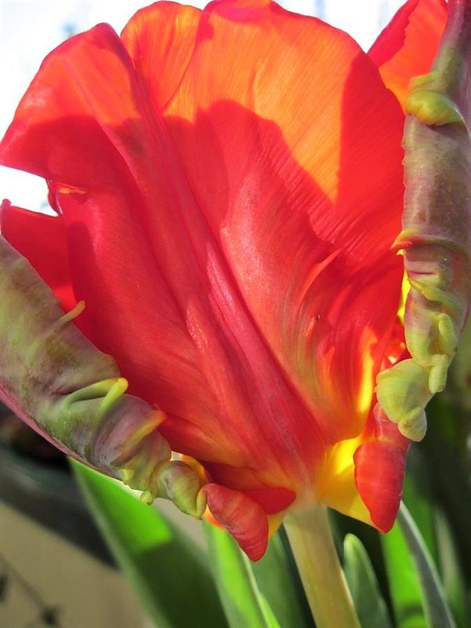 Tulip sculpture by Rosita Larsson