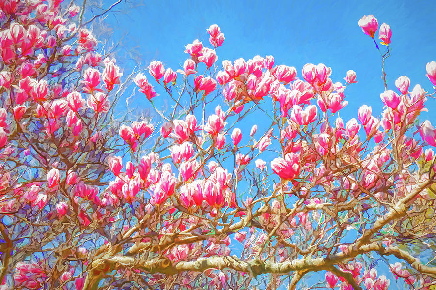 Tulip Tree with Pink Flowers by Dan Carmichael