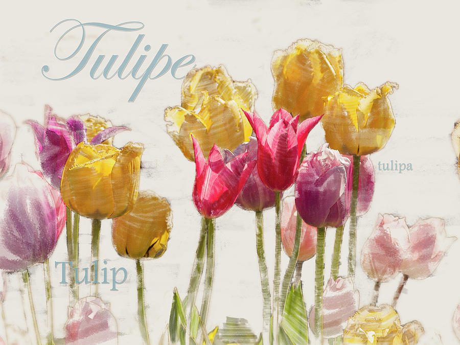 Tulipe Graphic by Mark Mille