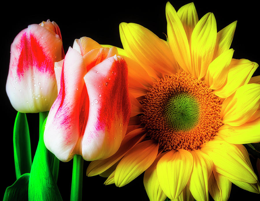 Tulip Photograph - Tulips And Sunflower by Garry Gay