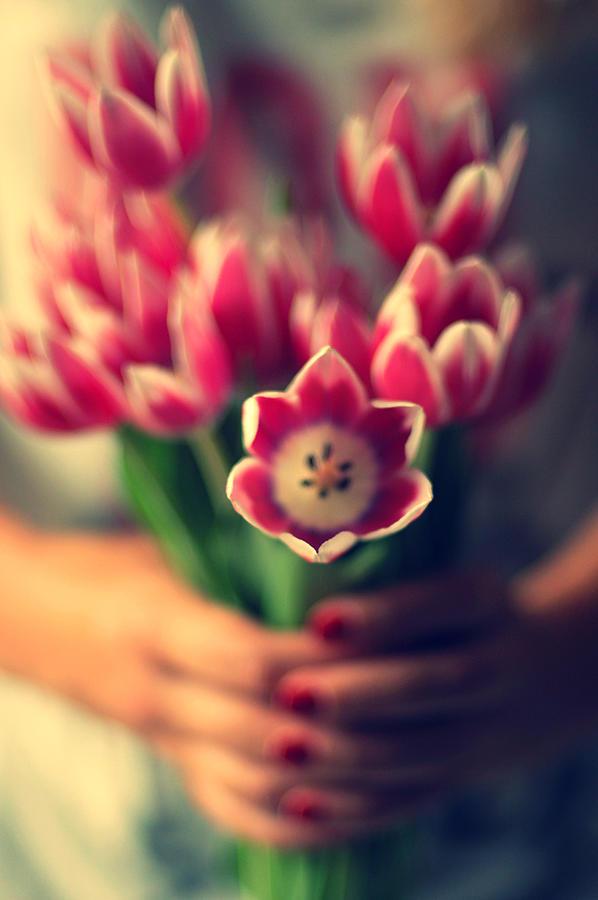 Tulips In Woman Hands Photograph by Photo By Ira Heuvelman-dobrolyubova