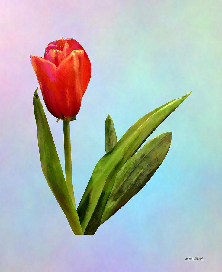 Tulips - Single Red Tulip by Susan Savad