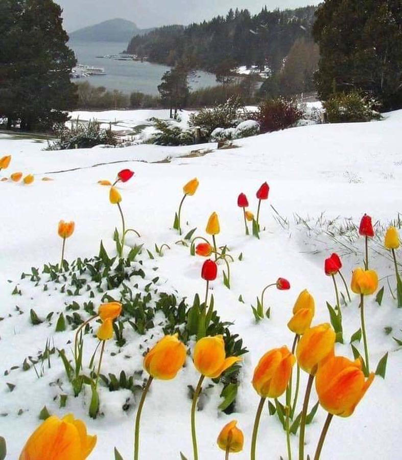 Tulips Spring Break by Gary Smith