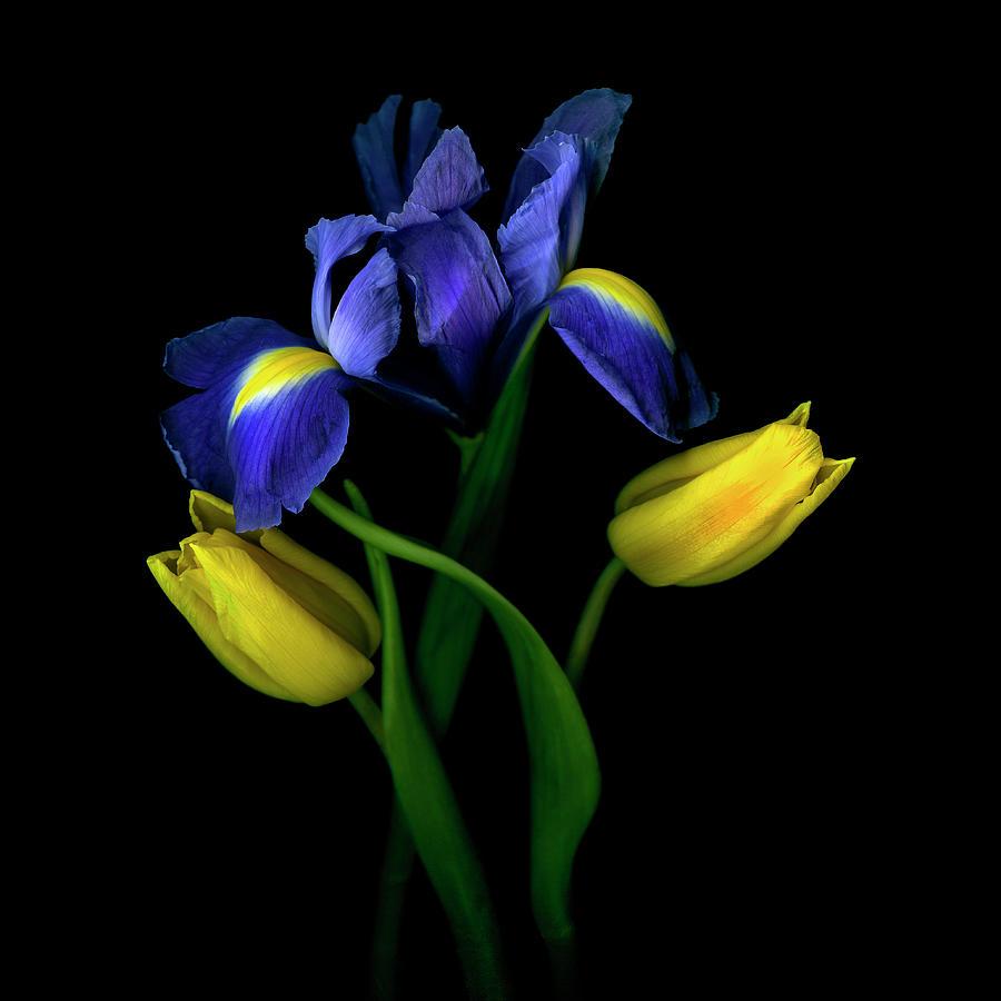 Tulips Tulipa With Irises Iris On Black Photograph by Magda Indigo
